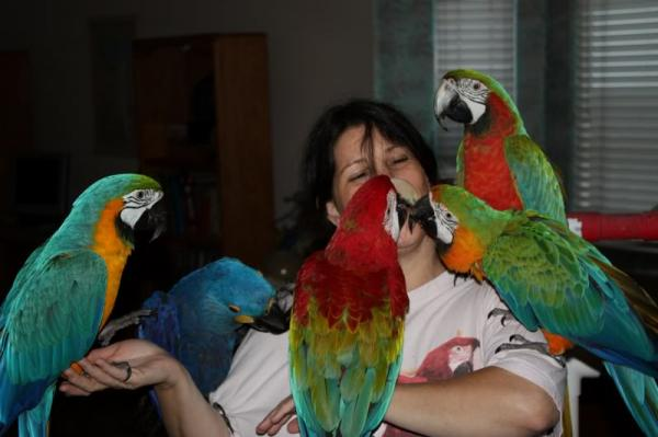 Buy African Grey / Macaw /cockatoo Parrots And Fertile Eggs For Sale..