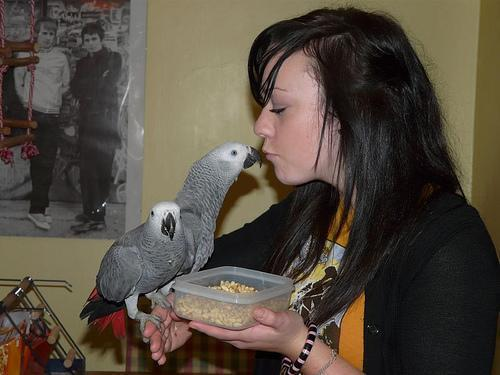 Buy African Grey / Macaw /cockatoo Parrots And Fertile Eggs For Sale.. 2